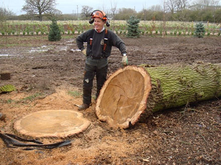 Tree Surgeons Worcester